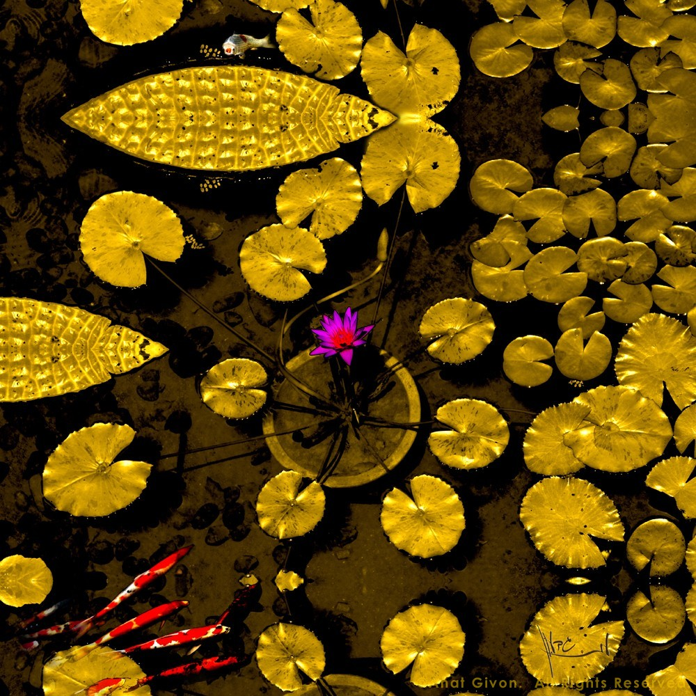 """""""Water Lily Gold Leaves With Koi Fish"""" - Private Collection"""