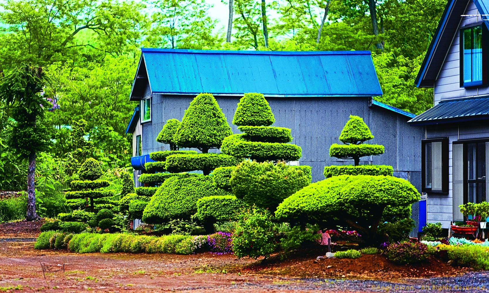 Bonzai Garden, Hokkaido, Japan