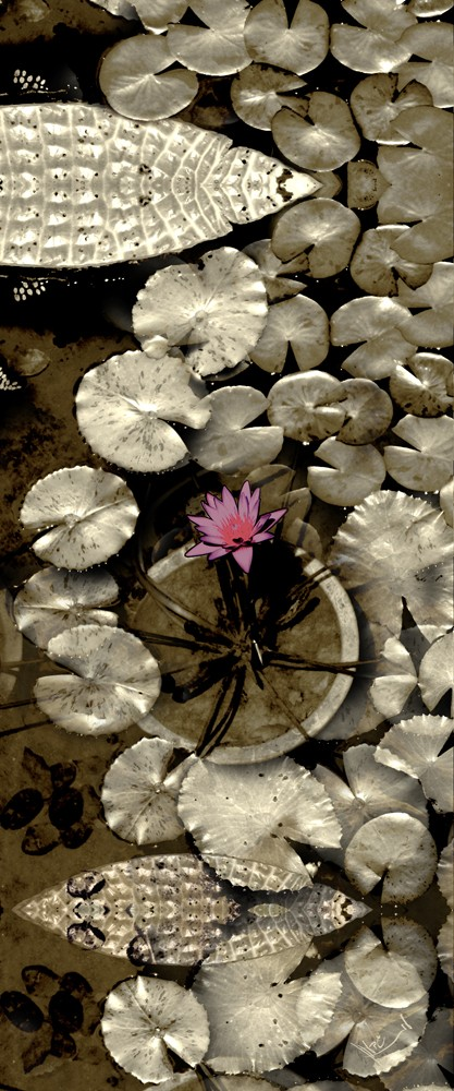 Water Lily Silver