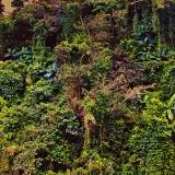 Ayala Westgrove Vegetation, Philippines