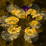 Water Lily Gold Leaves 5